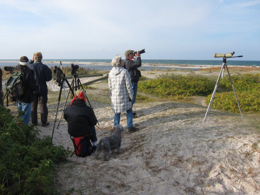 Falsterbo_2014